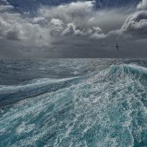 Albatros  Seascape