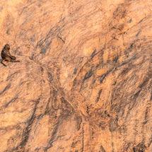 Baboon Landscape