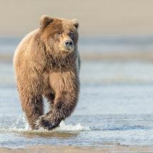 Charge Alaska Bears Sept 2014-7023