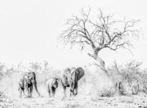 The Kruger National Park South Africa