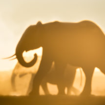 Elephants in the Light and Dust
