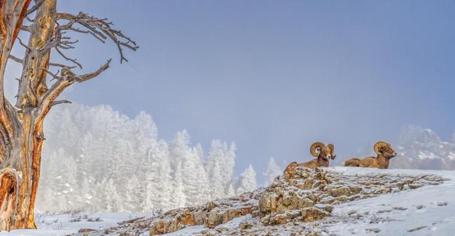 Enjoying the Sunshine Yellowstone Jan 2014-8293