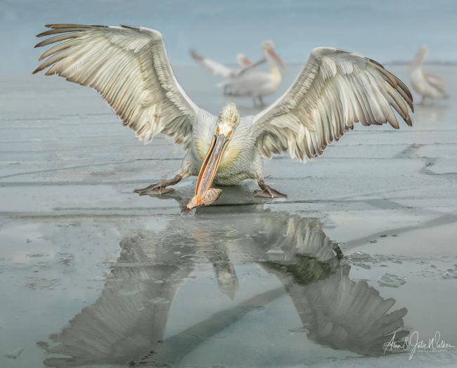 Fishing through the Ice