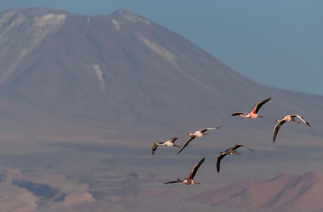Flamingo Landscape 3