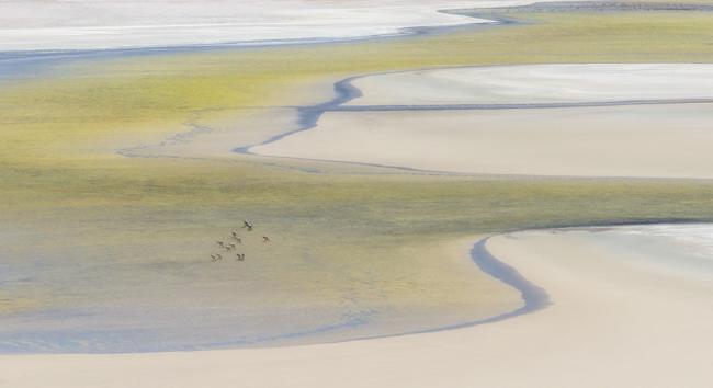 Flamingo  Landscape