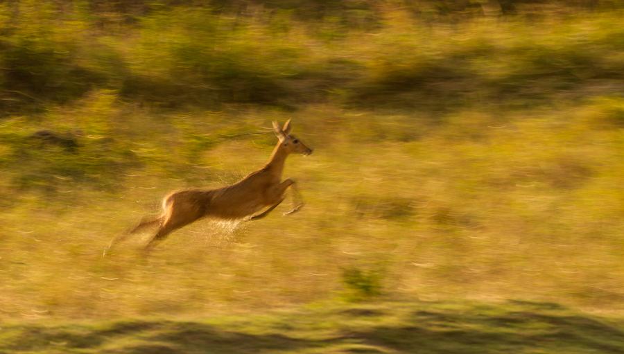 Fleeing-from-a-Cheetah