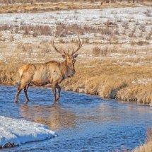 Grand Tetons-Elk Crossing River