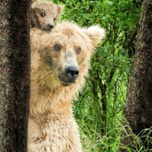 Hiding  behind  Mum