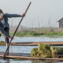 Collecting the weed, Inle Lake