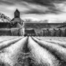 Lavender and Abbey