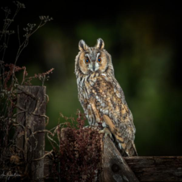 Kestrels, Kingfishers and other woodland birds