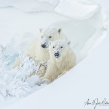 Mum and Yearling Cub