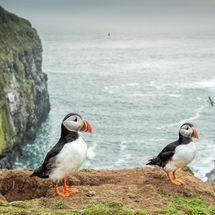 Nesting on the cliff edge