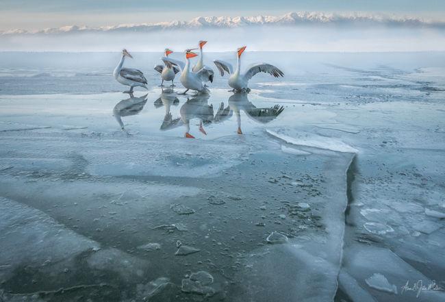 Ice annd Mist on Kerkini Lake
