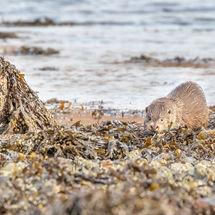 Otter in Enviroment