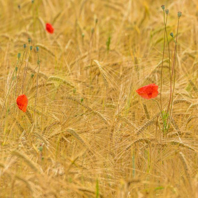 Provence France July 2014-0309