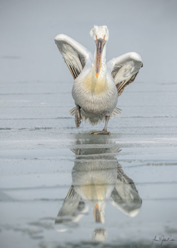 Reflection in the Ice