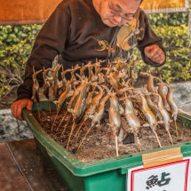 Salted Raw Fish on a Stick