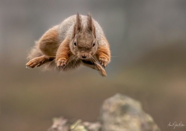 Squirrel Jump