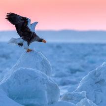Steller Sunrise