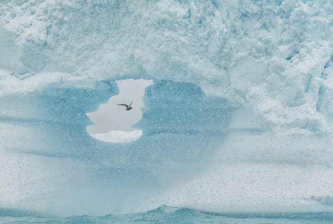 Tern  through  the  Iceberg