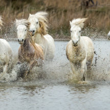 The  Power  of  the  White  Horses