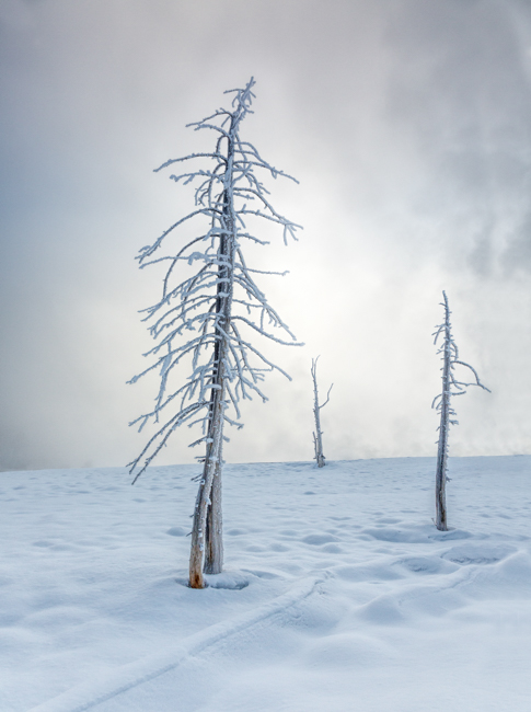 Three Trees in the Mist and Snow 2