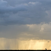 Topi in Rain Storm