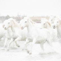 White  Horses  High  Key