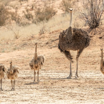 Ostritch Family