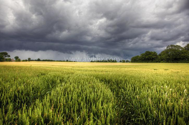 <br>Summer storm