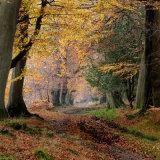 Ashridge Autumn Colours