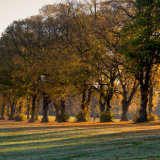 Sunlight though the trees, Rothamsted Park, Harpenden