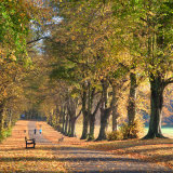 Avenue of trees with joggers, Rothamsted Park