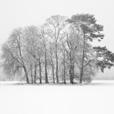 Trees in Winter, Rothamsted Park