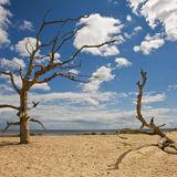 Dead trees 2, Covehithe beach