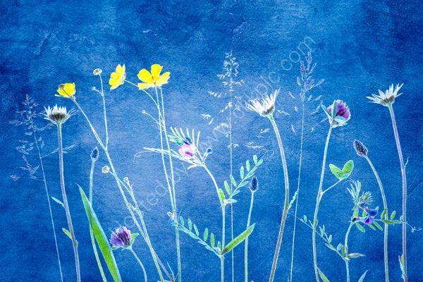 Wild flowers 5 on cyanotype background