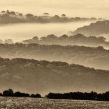 Misty Morning over Somerset Levels 2