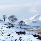 Tree line on Skye