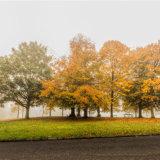 The Baa Lamb Trees in the Autumn