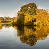 Reflections in Verulamium Park lake St Albans