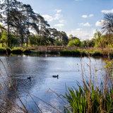 The Ponds, Harpenden