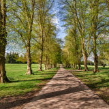 Avenue of Trees in the Spring