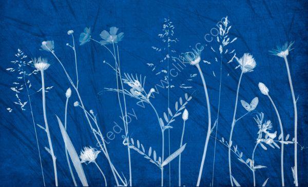 Wild flowers 4 on cyanotype background