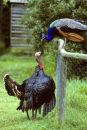 Talking turkey…