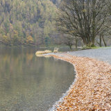 Autumn leaves, Buttermere