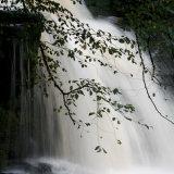 Delicate Branch, Falling Water