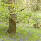 In and Out the Dusty Bluebells