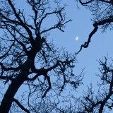 Moondance