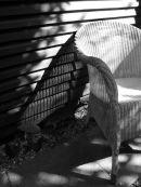 Garden Chair & Shadows